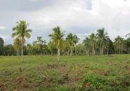 lot for sale samal island philippines (4)